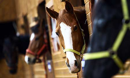 mobile-equine-veterinary-package-2