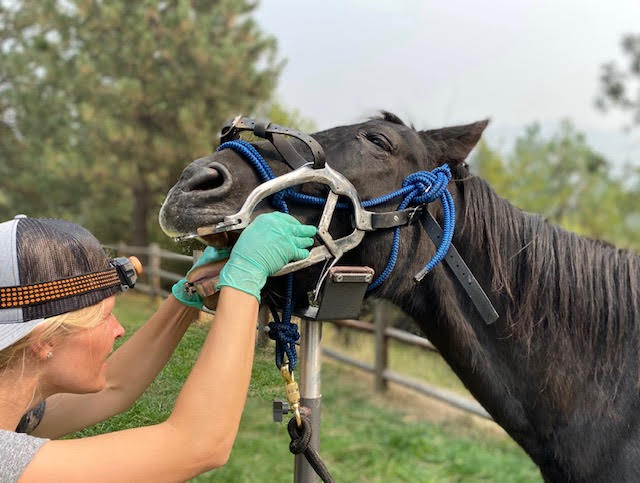 Equine Dental Care, Rocky Mountain Equine Vet
